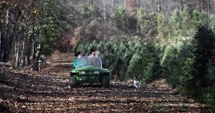 Dillards Christmas Tree Farm by Whispering Pines Christmas Tree Farm Christmas Lights Decoration