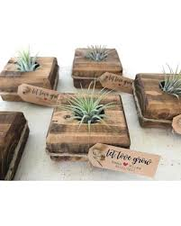 Rustic Wedding Favor Succulent Favors Air Plant