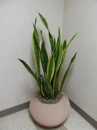 Best Plants For Bathroom Feng Shui by Plants In Bathroom Vastu 100 Images 64 Best Plants Bathroom