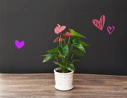 100 Blooming House Mahoneys Garden Center Flowers For Your Valentine