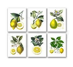 Kitchen Decor Lemons Wall Set Of 6 Unframed Yellow Lemon Citrus Fruits Botanical Art