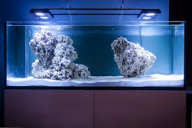 Click This Image To Show The Full-size Version. | Animation ... Aquascape Designs Surripuinet Aquascaping Live Rocks In Your Saltwater Aquarium Columns A Saltwater Tank Callorecom Need Ideas General Rfkeeping Discussion Week 3 Aquascaping 120 Gal Rimless Update Youtube 55g Vertical Tank Ideas Saltwaterfish Forum Aquascape With Rocks Google Search Aquariums Pinterest Bring Back The Wall Rock News Reef Builders Walls For Building Tiger Fish Aquascapinglive Rock Help Tcmas Forums