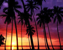 The Beach Sunset With Palm Trees