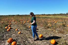 Tallahassee Heights Umc Pumpkin Patch by 16 Cool Patch Pumpkins Corn Maze 2017 Pumpkin Patch