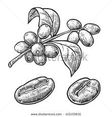 Coffee Plant Clipart Seed 1