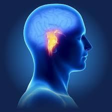 Lightheadedness When Standing by When Dizziness Affects Your Life Nemechek Autonomic Medicine