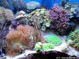 eclairage led pour aquarium eau de mer aquarium récifal et des aquariums récifaux