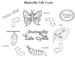 Discount Butterfly Growing Kit FREE Life Cycle Coloring Pages