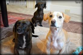 Using Pumpkin For Diarrhea In Dogs by Dog Diarrhea Why It Happens And How To Help Rover Com