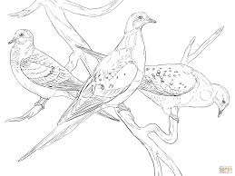 Surprising Idea Pigeon Coloring Pages Click The Passenger Pigeons To View Printable Version Or Color It Online Compatible With IPad And Android Tablets