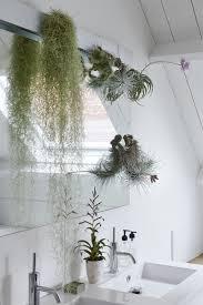 badezimmerpflanzen sind die zimmerpflanzen des monats mai