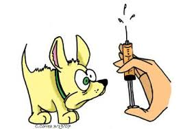 winrock animal clinic vaccinations