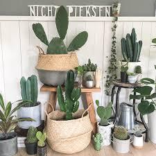 kaktus bilder ideen