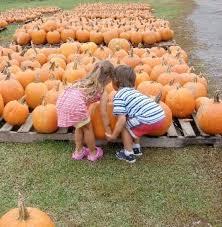 Pumpkin Picking Nj by Emilie And Christopher Sawicki Pumpkin Picking Sml Terhune Orchards