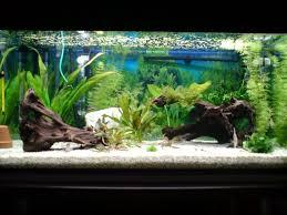 aquarium d eau douce aquarium poisson eau chaude poisson naturel