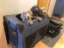 Holidays Travel & Vacations | Owyheestar Weimaraner's News Akc Reunite Home Facebook Npr Shop Promo Code Free Shipping Sheboygan Sun 613 Pages 1 32 Text Version Fliphtml5 Uldaseethatiktk Urlscanio Pet Microchip Scanner Universal Handheld Animal Chip Reader Portable Rfid Supports For Iso 411785 Fdxb And Id64 Chewycom Coupon Codes Door Heat Stopper Giant Bicycles Com Fitness Zone Bred With Heart Faqs Owyheestar Weimaraners News Pizza Hut Big Dinner Box Enterprise 20 Aaa