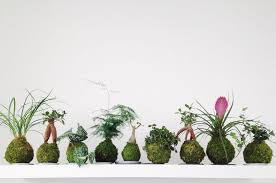 100 Www.home And Garden Trend Alert Kokedama Japanese Moss Balls Adds Live Art To