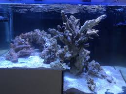 Aquascaping With Different Types Of Rock? | REEF2REEF Saltwater ... Is This Aquascape Ok Aquarium Advice Forum Community Reefcleaners Rock Aquascaping Contest Live Rocks In Your Saltwater Post Your Modern Aquascape Reef Central Online There A Science To Live Rock Sanctuary 90 Gallon Build Update 9 Youtube Page 3 The Tank Show Skills 16 How Care What Makes Great Large Custom Living Coral Aquariums Nyc