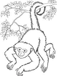 Cute Monkey Coloring Pages Image Photo Album Printable