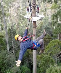 100 Treetops Maleny Powell Backs Plan For Kondalilla Zipline Tourism Project