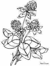 Columbine Flowers Coloring Pages Redclover