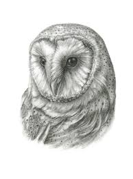 FRAMED Original Barn Owl Drawing By TheBriarArtShop On Etsy | Owls ... Black Barn Owl Oc Eclipse By Pkhound On Deviantart Closeup Of A Stock Photo 513118776 Istock Birds Of The World Owls This Galapagos Barn Owl Lives With Its Mate A Shelf In The Started Black Paper Today Ref Paul Isolated On Night Stock Photo 296043887 Shutterstock Stu232 Flickr Bird 6961704 Moonlit Buttercups Moth Necklace Background Image 57132270 Sd Falconry Mod Eye Moody