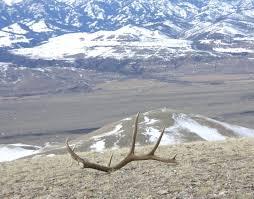 Deer Antler Shed Trap by 27 Best Shed Antler Hunting Images On Pinterest Sheds Antlers