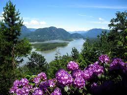 fleur et plante du lac images gratuites paysage arbre eau la nature de plein air