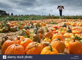 Lane Farms Pumpkin Patch by Halloween Fruit Cups Recipe Halloween Fruit Fruit Cups And