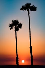 California Tall Palm Trees At Sunset In San Clemente Beach