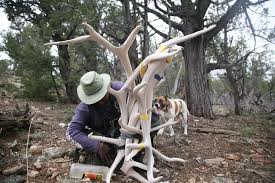 Deer Antler Shed Hunting by Searching For Shed On The Hunt For Antlers In Arizona Kjzz