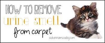 Cat Litter Carpet by How To Remove Urine Smell From Carpet Ask Anna