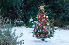 Are Christmas Trees Poisonous To Dogs Uk by Real Christmas Trees Or Fake Ones Which Are Better For The