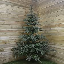 8ft Artificial Christmas Trees Uk by Nobilis Fir Artificial Christmas Tree 2 4m 8ft Fizzco Amazon