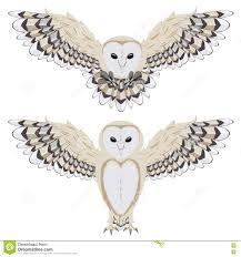Cartoon Barn Owl Stock Vector - Image: 73069768 Barn Owl Landing Spread Wings On Stock Photo 240014470 Shutterstock Barn Owl Landing On A Post Royalty Free Image Wikipedia A New Kind Of Pest Control The Green Guide Fence Photo Wp11543 Wp11541 Flight Sequence Getty Images Imageoftheday By Subject Photographs Owls Kaln European Eagle Coming Into Land Pinterest Pictures And Bird