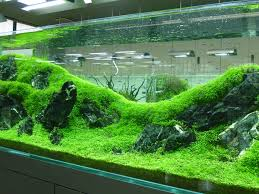 Planted Freshwater Aquarium really fine carpet Rolling hills