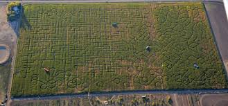 Wow Brackwell Pumpkin Patch Location by The Best Pumpkin Patches In Sacramento Tripsavvy