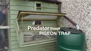 100 Pigeon Coop Plans Clever Loft Trap Door Design