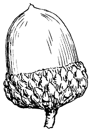 Black And White Acorn Clipart