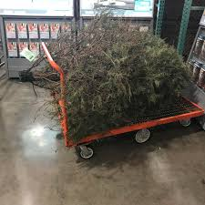 This Guy Wins The Costco Returns Championship Successfully Returned A Real Christmas Tree After Holidays