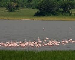 Lake Kwatwe Uganda Safaris