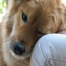 Pumpkin Puree For Dog Constipation by Help With Constipation My Dog Is Constipated What Can I Do To Help