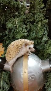 Porcupine Eating Pumpkin Gif by 9o1a1y7 Jpg