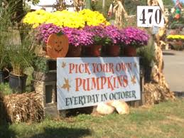 Pumpkin Picking Nj Colts Neck by Pumpkin And Apple Picking In Monmouth County Middletown Nj Patch