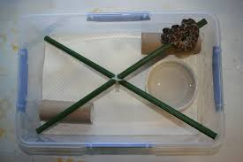 Ball Python Bedding by How To Set Up A Hatchling Python Tub Brendan U0027s Reptiles