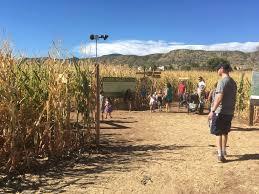 Denver Pumpkin Patch Corn Maze by Chatfield Botanic Gardens Corn Maze Colorado Fasci Garden