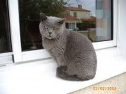 comment enlever une odeur de pipi de chat sur un canapé résolu