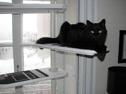 Floor To Ceiling Tension Rod Shelves by Black And White Stolmen Cat Tree Ikea Hackers Ikea Hackers