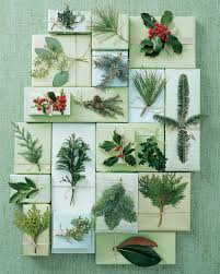 Fresh Christmas Trees Types by Holiday Greenery 101 Martha Stewart