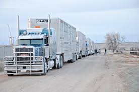 Beef Producers Applaud 90-day Waiver Of ELD Trucking Rule | Beef ... Trucking The Worlds Best Photos Of 389 And Livestock Flickr Hive Mind About Metzger Agricultural Exemptions Instated For Regulations Pork Firms Worried Electronic Logging Device Could Hurt Henderson Jobs Otr Long Haul Truck Drivers West Land Cattle Hauler Jessica Lorees 2003 Pete 379 Livestockcattle Haulers Sale Llc Kenworth T800 With 4 Axle Tra Truck Spill Cleaned Up A Lot Help Krvn Radio Australian Livestock Rural Transporters Association